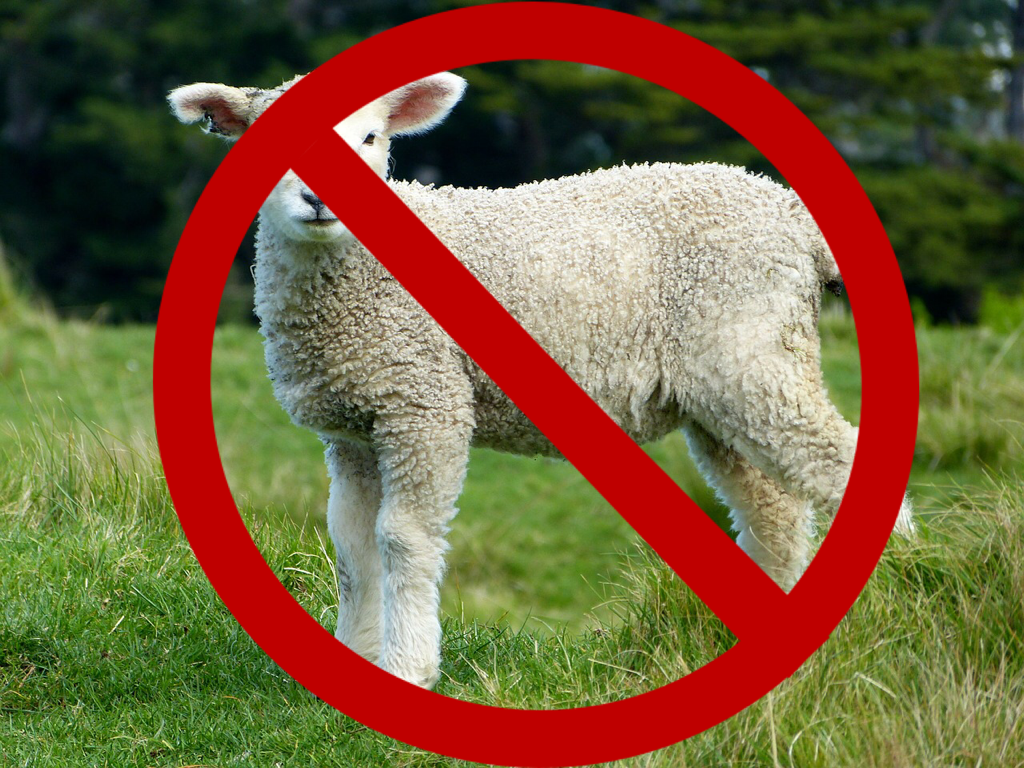 No Sheep Allowed